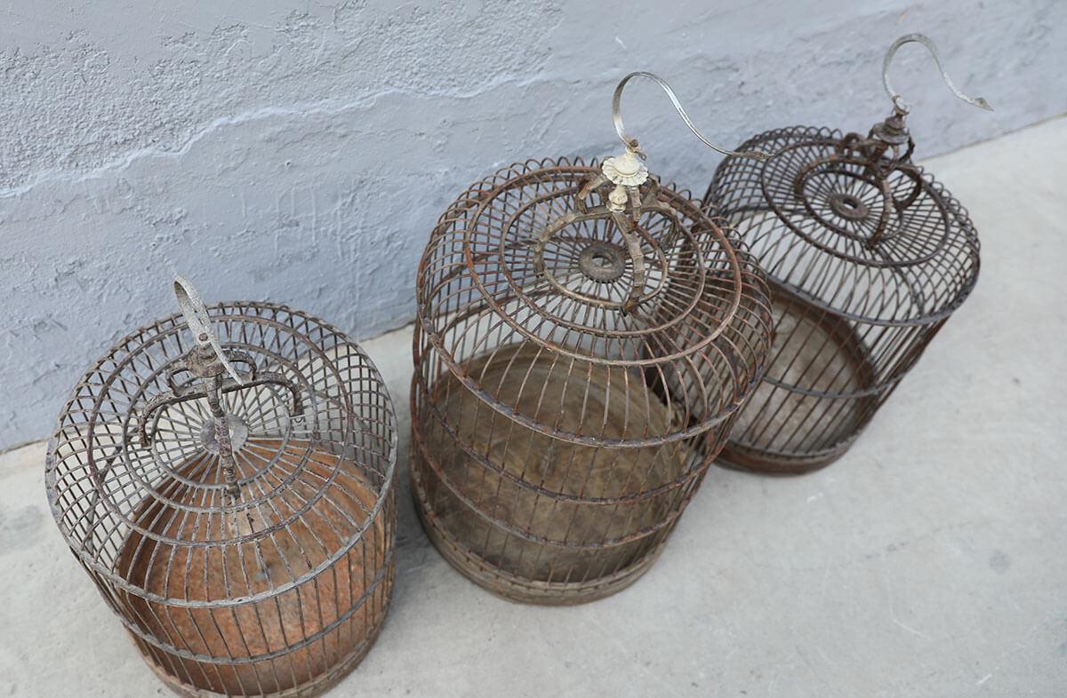 Koop Vogelkooi (per stuk)